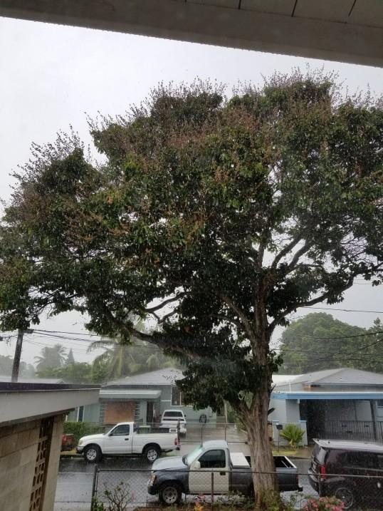 one of few street tree left
