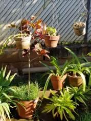 multi-tier plantings