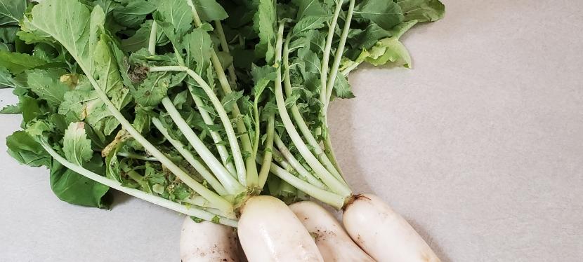 Quick Post: Harvesting
